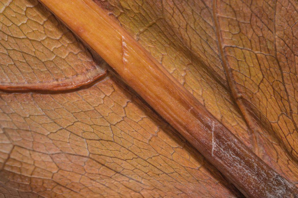 Blattstrukturen